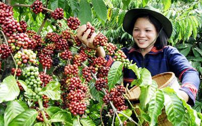 越南农业.jpg